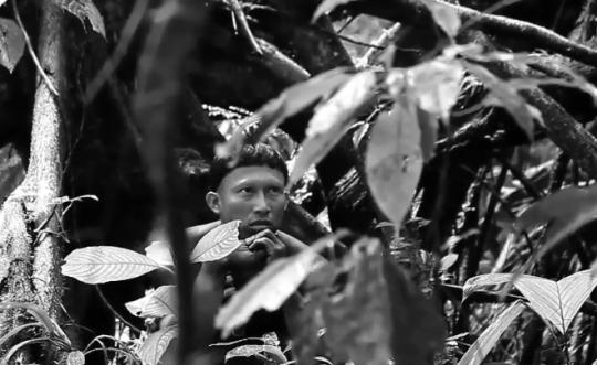 ______film Amazonas
