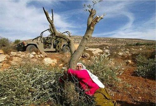 ______-palestina-abraza-su-olivo