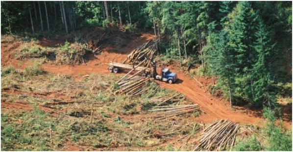 ___Deforestacion Amazonia