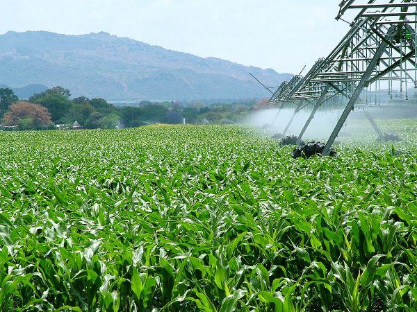 agroindustria conamina