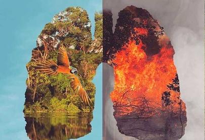 ____Amazonia en llamas