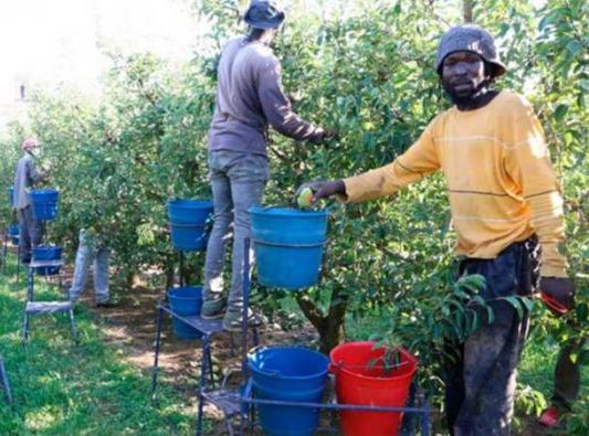___trabajadores inmigrantes__E$pania